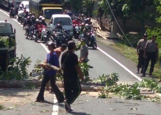 Nusabali.com - jelang-musim-hujan-polisi-lakukan-pemangkasan-pohon