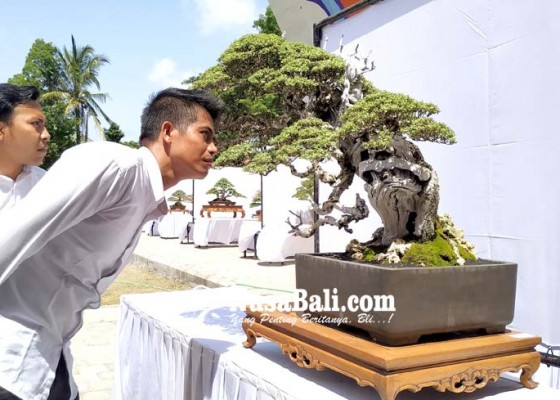 Nusabali.com - ratusan-bonsai-ikut-kontes-tingkat-nasional