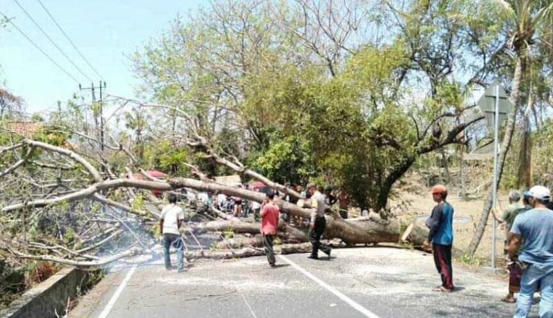 www.nusabali.com-pohon-tumbang-arus-lalin-sempat-terhenti