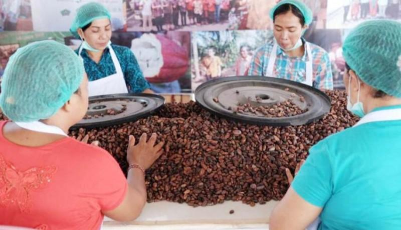 www.nusabali.com-jembrana-miliki-desa-devisa-sektor-kakao