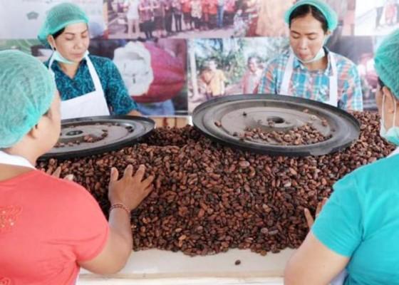 Nusabali.com - jembrana-miliki-desa-devisa-sektor-kakao