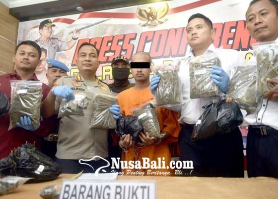 Nusabali.com - gerebek-pengedar-amankan-76-kg-ganja-untuk-tahun-baru