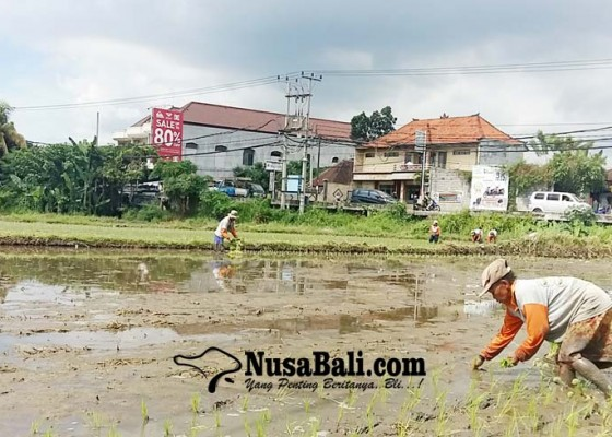 Nusabali.com - pupuk-bersubdisi-didistribusikan-lewat-kartu-tani