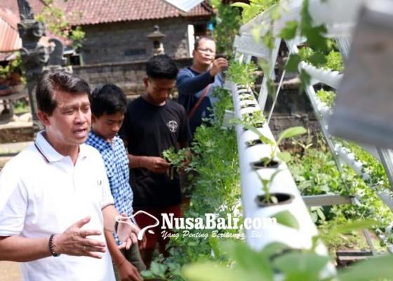Nusabali.com - bupati-suwirta-tinjau-percontohan-inovasi-hidroponik-kk-miskin