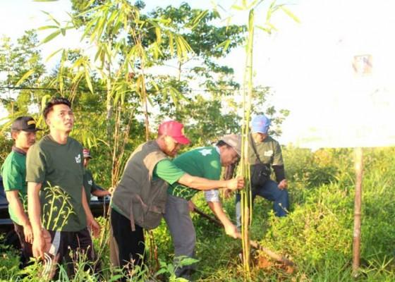 Nusabali.com - jaga-sumber-air-bupati-tanam-bambu