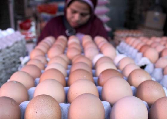 Nusabali.com - bali-penuhi-kebutuhan-telur-nusa-tenggara-dan-jatim
