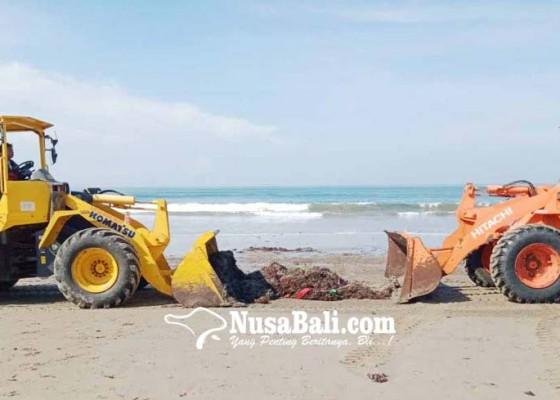 Nusabali.com - bersihkan-sampah-kiriman-dinas-lhk-terjunkan-alat-berat