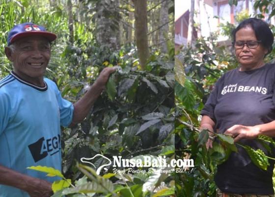 Nusabali.com - angkat-derajat-kopi-lokal-badung-utara-hingga-ke-luar-negeri
