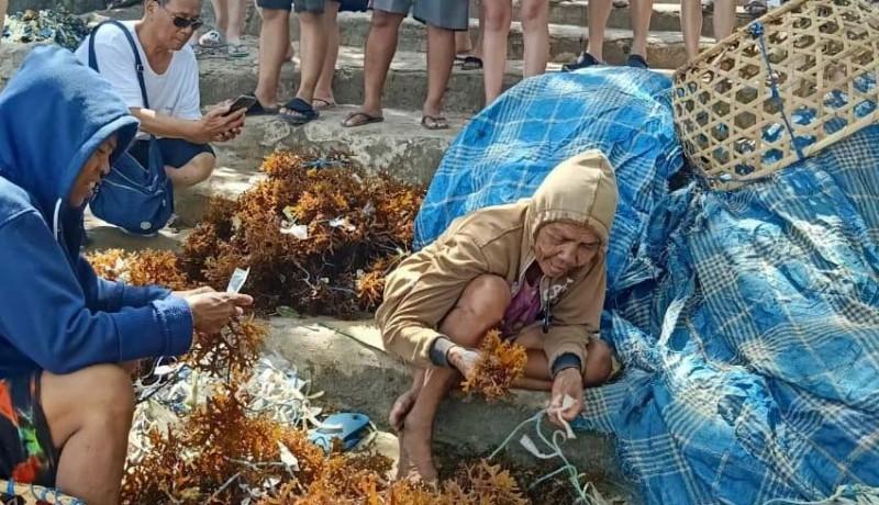 www.nusabali.com-budidaya-rumput-laut-jadi-daya-tarik-wisata