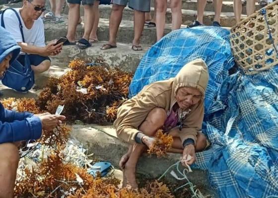 Nusabali.com - budidaya-rumput-laut-jadi-daya-tarik-wisata