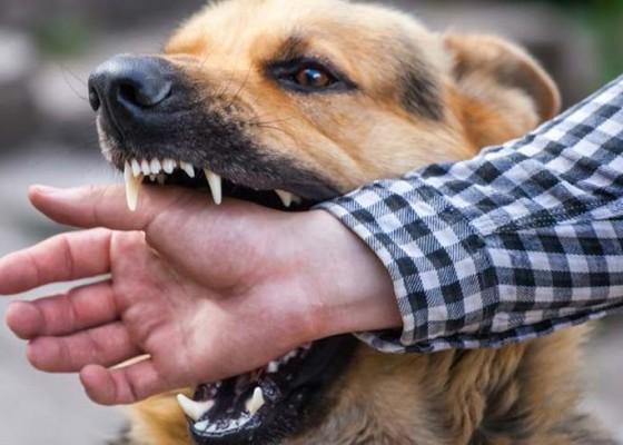 Nusabali.com - warga-padangan-resah-tujuh-orang-digigit-anjing