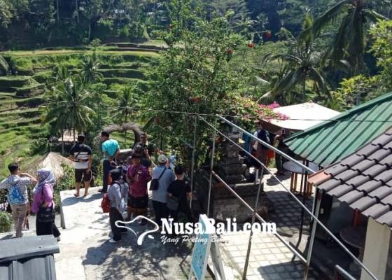 Nusabali.com - berkah-warga-desa-tegallalang-dan-7-petani