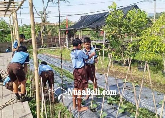 Nusabali.com - siswa-smpn-1-abang-diajari-cara-berkebun-yang-benar