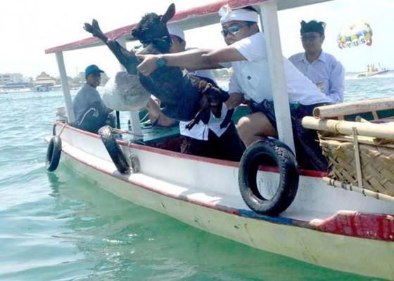 Nusabali.com - jasamarga-bali-tol-gelar-upacara-mapakelem-di-teluk-benoa