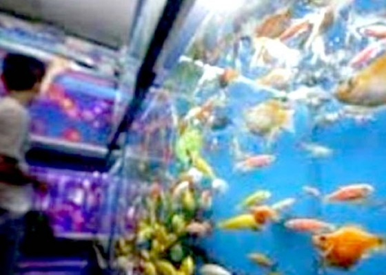 Nusabali.com - ikan-hias-dijadikan-penggerak-kelautan