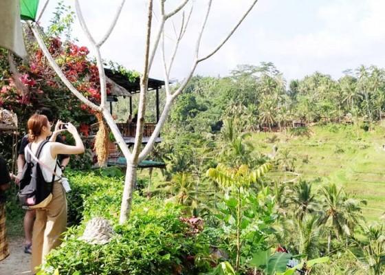 Nusabali.com - pengelola-pemilik-view-mesti-satu-kata