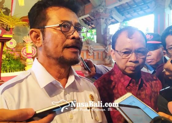 Nusabali.com - soal-flu-babi-mentan-minta-masyarakat-tak-khawatir