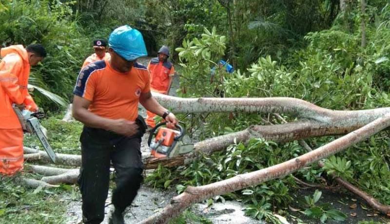 www.nusabali.com-bpbd-kewalahan-evakuasi-pohon-tumbang