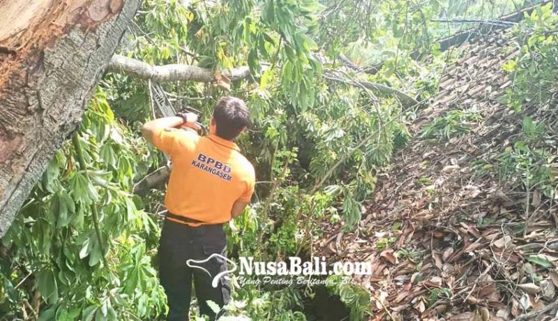 www.nusabali.com-rumah-dan-dapur-tertimpa-pohon-tumbang