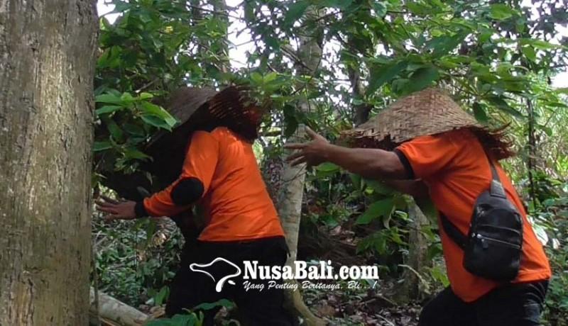 www.nusabali.com-lakukan-ritual-menari-kelilingi-pohon-pakai-topi-kukusan