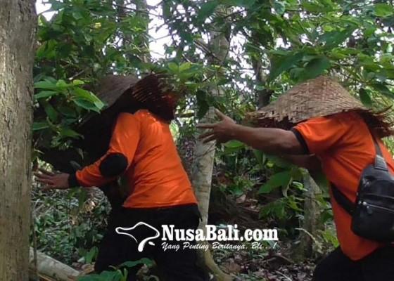 Nusabali.com - lakukan-ritual-menari-kelilingi-pohon-pakai-topi-kukusan