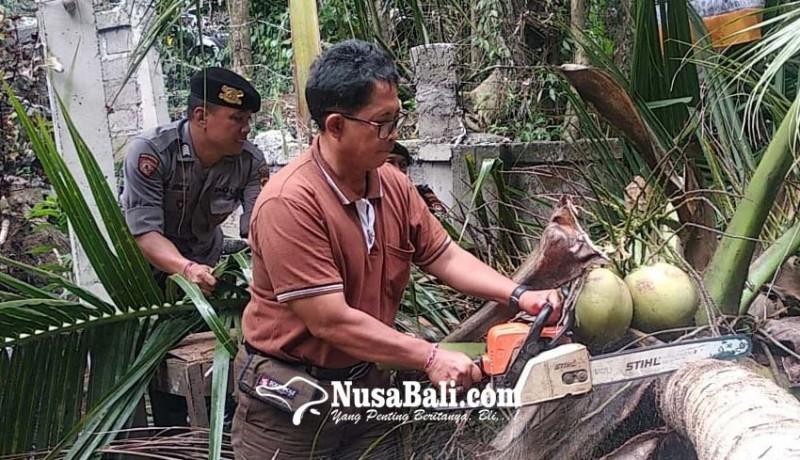 www.nusabali.com-pohon-kepala-timpa-gudang-pensiunan-pns