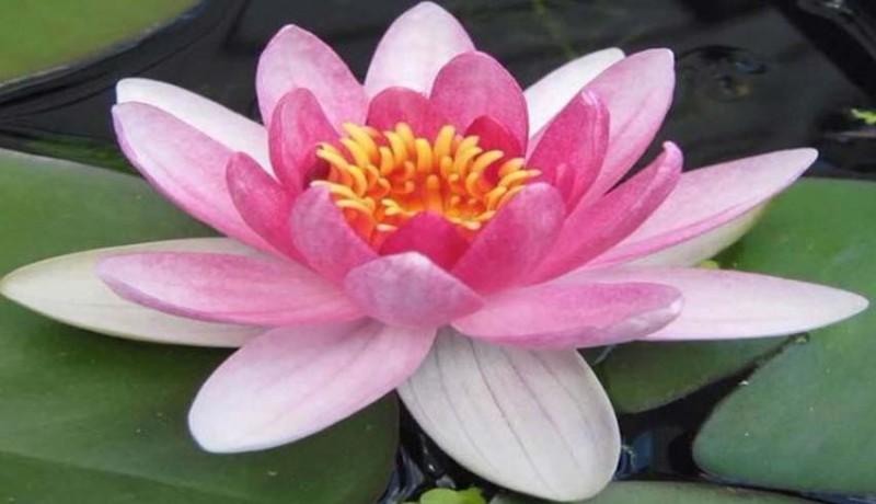www.nusabali.com-lentera-nutrisi-spiritual-memasuki-2020