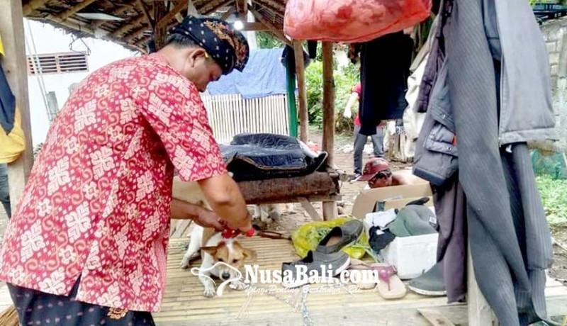 www.nusabali.com-anjing-rabies-serang-pemilik-di-sangkaragung