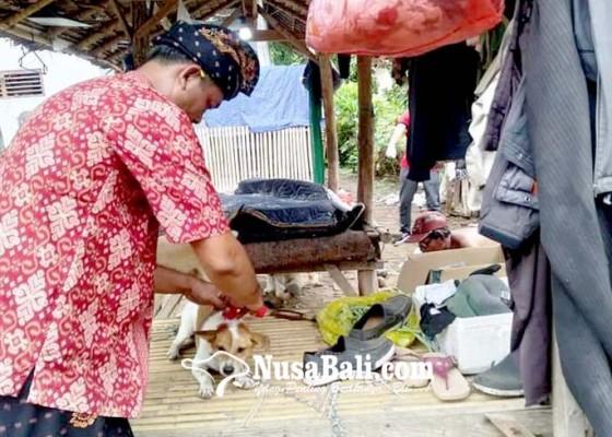 Nusabali.com - anjing-rabies-serang-pemilik-di-sangkaragung