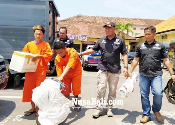 Nusabali.com - pekerja-tambak-kuras-ratusan-kilogram-ikan-milik-bos
