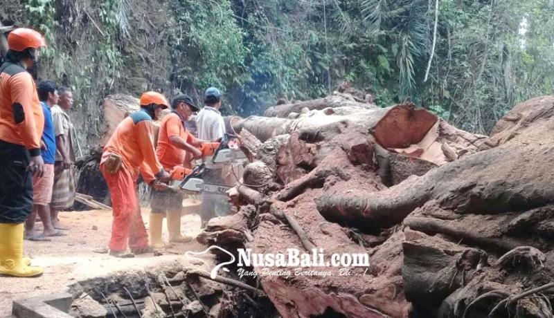 www.nusabali.com-bak-penampungan-air-rusak-tertimpa-pohon-tumbang