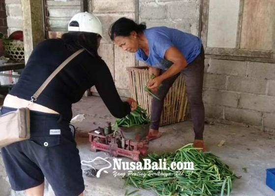 Nusabali.com - petani-vanili-sumringah-harga-tembus-rp-200-ribukg