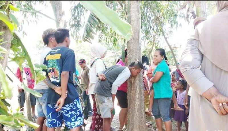 www.nusabali.com-heboh-pohon-akasia-menangis-di-jember