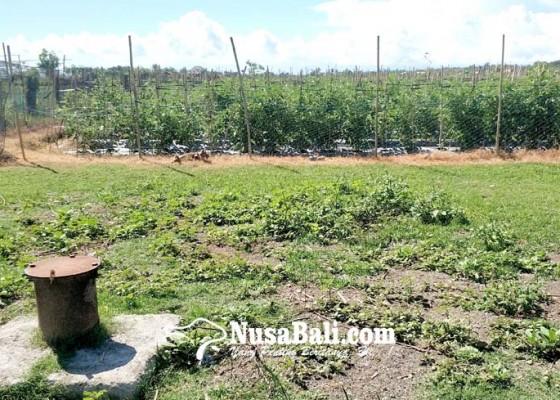 Nusabali.com - dua-sumur-bor-ditjen-sda-mangkrak-bertahun-tahun