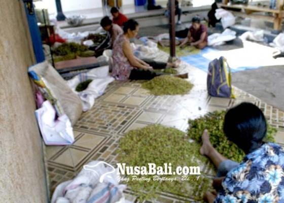 Nusabali.com - harga-cengkih-anjlok-rantai-pemasaran-harus-diperpendek