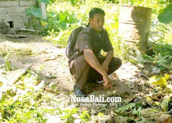 Nusabali.com - puluhan-babi-mati-mendadak-di-jegu