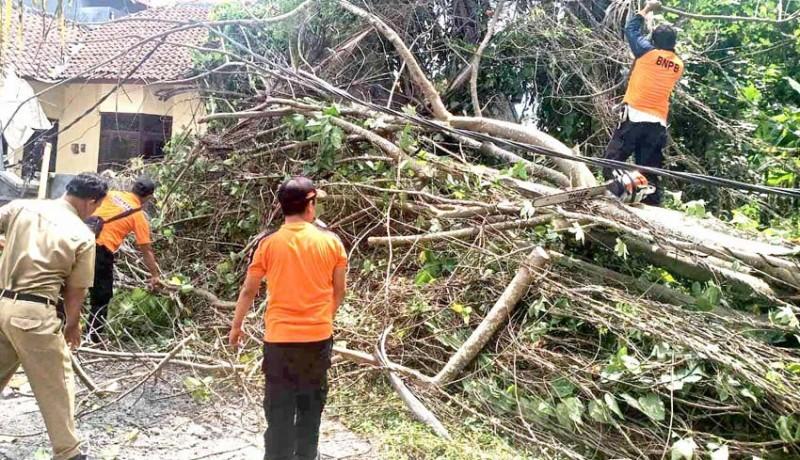 www.nusabali.com-pohon-tumbang-timpa-palinggih