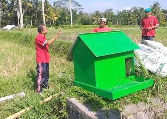 Nusabali.com - usir-hama-petani-pasang-rumah-burung-hantu