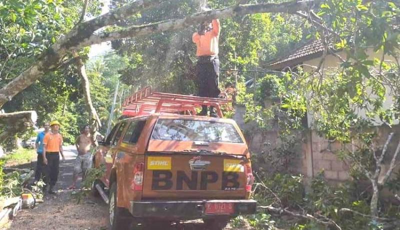 www.nusabali.com-pohon-tumbang-timpa-panyengker-rumah