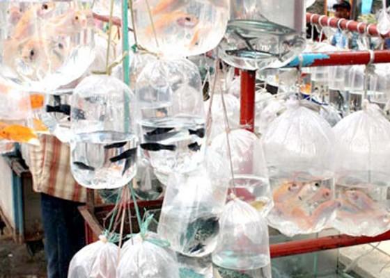 Nusabali.com - produksi-ikan-hias-ditargetkan-18-miliar-ekor