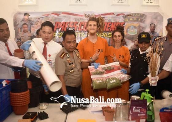 Nusabali.com - rumah-industri-ganja-milik-wn-rusia-digerebek