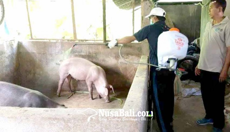 www.nusabali.com-dinas-pertanian-ajarkan-jurus-tangkal-virus-flu-babi-afrika