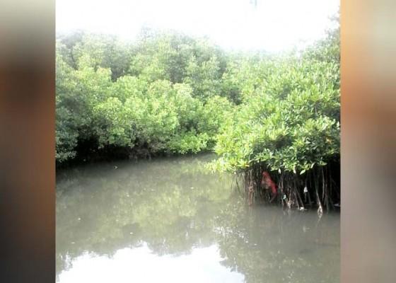 Nusabali.com - sampah-ancam-kelestarian-mangrove
