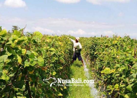 Nusabali.com - kaum-milenial-tolak-bertani-keberadaan-subak-terancam