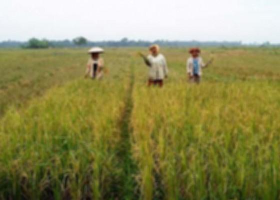 Nusabali.com - dilarang-alih-fungsi-lahan-pertanian-di-kawasan-danau-buyan