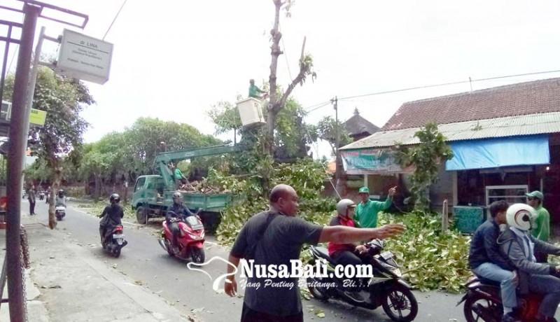 www.nusabali.com-dlhk-denpasar-lakukan-perompesan-pohon