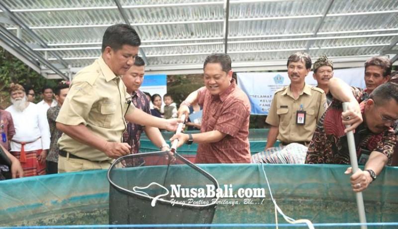 www.nusabali.com-rai-mantra-panen-perdana-ikan-lele-sistem-bioflok-di-tukad-bindu