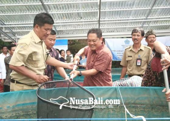 Nusabali.com - rai-mantra-panen-perdana-ikan-lele-sistem-bioflok-di-tukad-bindu