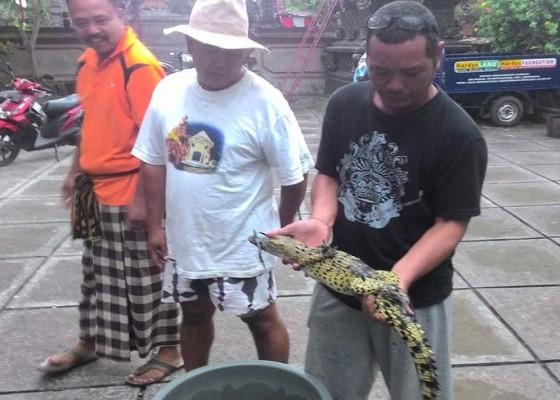 Nusabali.com - cari-ikan-malah-dapat-anak-buaya