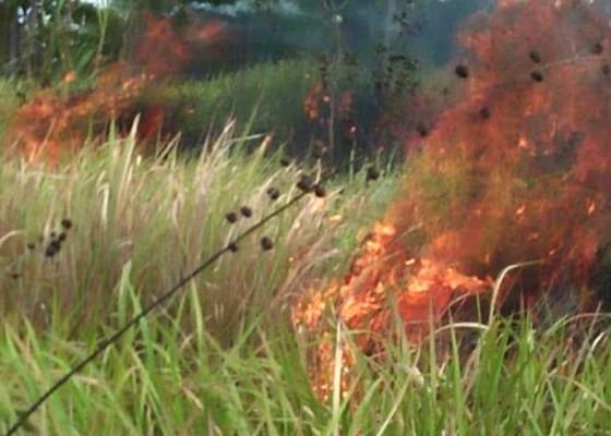 Nusabali.com - 2-hektare-alang-alang-di-subak-besang-terbakar